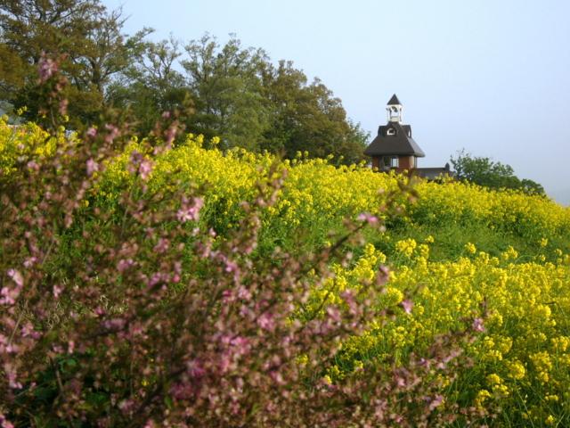 菜の花公園から(長野県飯山市)