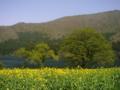 [風景・景観][湖][花]北竜湖(長野県飯山市)
