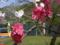 ハナモモ(長野県飯山市・北竜湖)