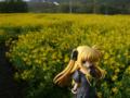 [フィギュア][コトブキヤ][リリカルなのは][*Season01:春]魔法少女リリカルなのは The MOVIE 1st フェイト・テスタロッサ カットNo.00