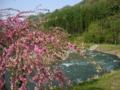 [風景・景観][花][河川]姫川・大出公園