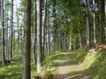 [風景・景観][森林]大出公園