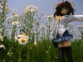 [フィギュア][GoodSmileCompany][D.C. ~ダ・カーポ~][*Season01:春]D.C. ~ダ・カーポ~ 朝倉音夢 カットNo.017