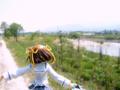 [フィギュア][GoodSmileCompany][D.C. ~ダ・カーポ~][*Season01:春]D.C. ~ダ・カーポ~ 朝倉音夢 カットNo.015