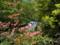 飛龍の滝(八千穂高原自然園にて)