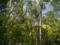 八千穂高原自然園にて
