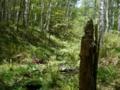 [風景・景観][森林]八千穂高原自然園にて