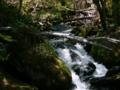 [風景・景観][森林][河川]八千穂高原自然園にて