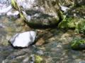 [風景・景観][河川]八千穂高原自然園にて