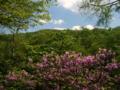 [風景・景観][花][森林]トウゴクミツバツツジ(八千穂高原自然園)