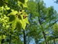 [風景・景観][森林]八千穂高原自然園