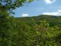 [風景・景観][森林][空]八千穂高原自然園