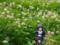 コトブキヤ 俺の妹がこんなに可愛いわけがない 黒猫 カットNo.004