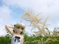 [フィギュア][ALTER][TYPE-MOON][Fate/stay night][*Season02:夏]Fate/stay night 魔法使いの夏休み セイバー -Summer Ver.- カットNo.017