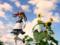 コトブキヤ 4-Leaves 白井黒子 とあるメイドの空間転移 カットNo.009