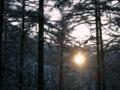 [風景・景観][雪][夕焼け]
