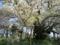 素桜神社の神代桜 (長野県長野市)