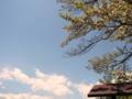[風景・景観][花][空][桜]素桜神社の神代桜 (長野県長野市)