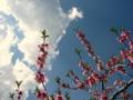 [風景・景観][花][桃][空]丹霞郷 (長野県飯綱町)