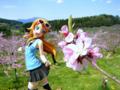 [フィギュア][コトブキヤ][俺妹][*Season01:春]俺の妹がこんなに可愛いわけがない 高坂桐乃 カットNo.019