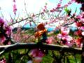 [フィギュア][コトブキヤ][俺妹][*Season01:春]俺の妹がこんなに可愛いわけがない 高坂桐乃 カットNo.017