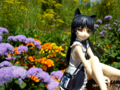 [フィギュア][コトブキヤ][俺妹][*Season02:夏]俺の妹がこんなに可愛いわけがない 黒猫 -memories- カットNo.010