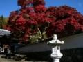 [風景・景観][史跡・名勝][紅葉][神社・仏閣]清水寺 (長野県長野市)