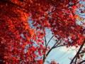 [風景・景観][紅葉]清水寺 (長野県長野市)