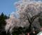 [風景・景観][神社・仏閣][花][桜]