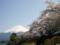 [風景・景観][花][桜]