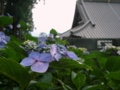 [花]松本市 弘長寺