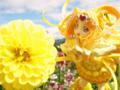 [フィギュア][アルファオメガ][プリキュア][*Season03:秋]アルファオメガ スイートプリキュア キュアミューズ カットNo.003