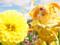 アルファオメガ スイートプリキュア キュアミューズ カットNo.003