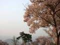 [風景・景観][桜]