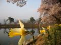 [風景・景観][桜][花]
