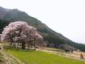 [風景・景観][桜][花]黒部のエドヒガン桜(長野県上高井郡高山村)