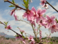 [花][風景・景観]丹霞郷 (長野県飯綱町)