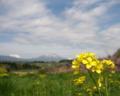 [菜の花][花][風景・景観]丹霞郷 (長野県飯綱町)