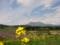 丹霞郷 (長野県飯綱町)[花][風景・景観]