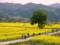 千曲川河川敷 (長野県飯山市)
