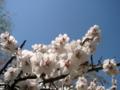 [風景・景観][花]谷厳寺(長野県中野市)