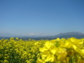 [風景・景観][空][花][菜の花]谷厳寺(長野県中野市)