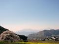 [風景・景観][桜][空]黒部のエドヒガン桜(長野県上高井郡高山村)