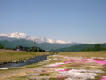[風景・景観][空][花]農具川河川公園の芝桜