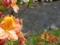 [風景・景観][花]