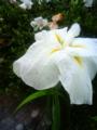 [はてなハイク][花]花写真