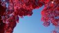 [風景・景観][紅葉]長円寺(長野県茅野市)