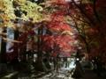 [風景・景観][紅葉]清水寺(長野県長野市)