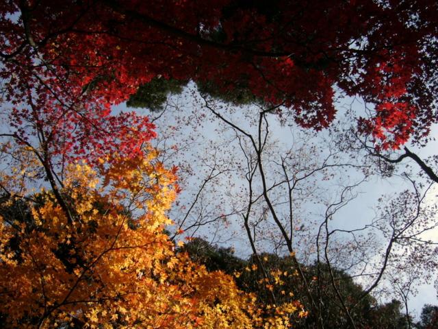 清水寺(長野県長野市)