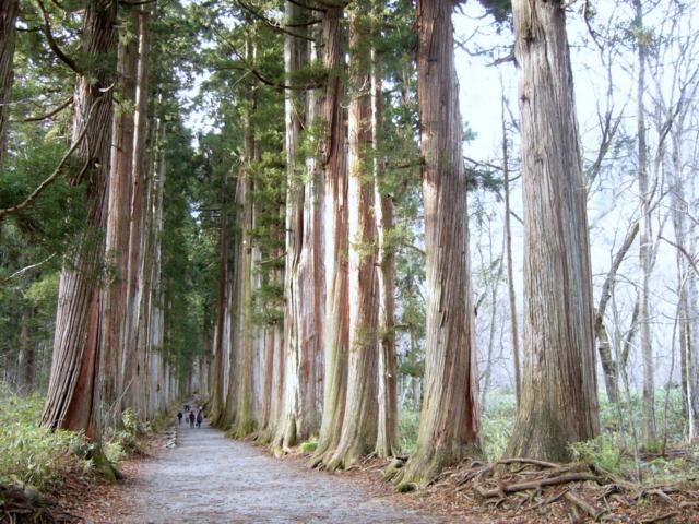 戸隠神社の杉並木(長野県長野市)